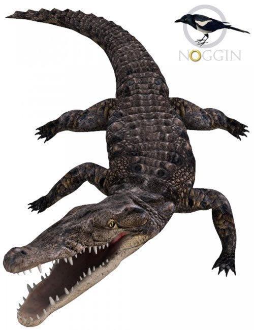 Noggin's Poser Croc