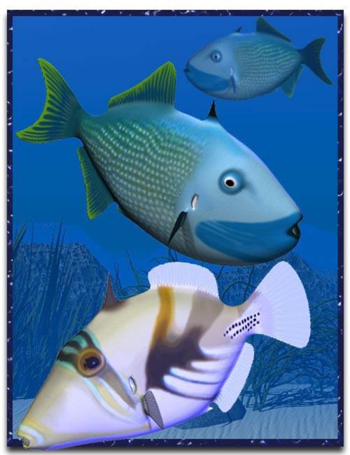 Trigger Fish [ .DUF & Iray UPDATE ]