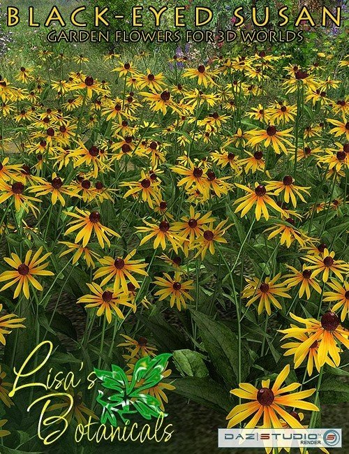 [UPDATE] Black-Eyed Susan