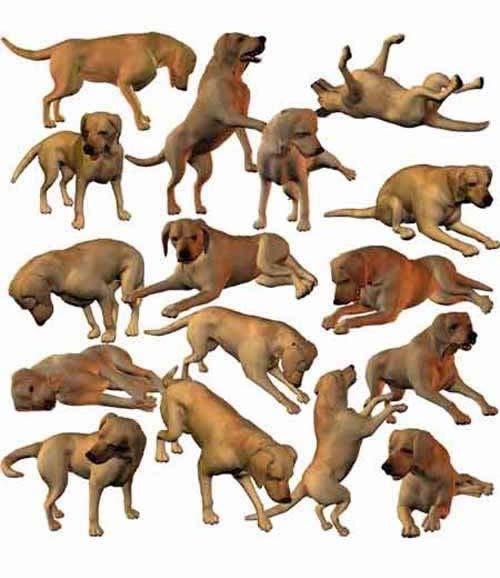 zz* - P4 Dog's Life Poses