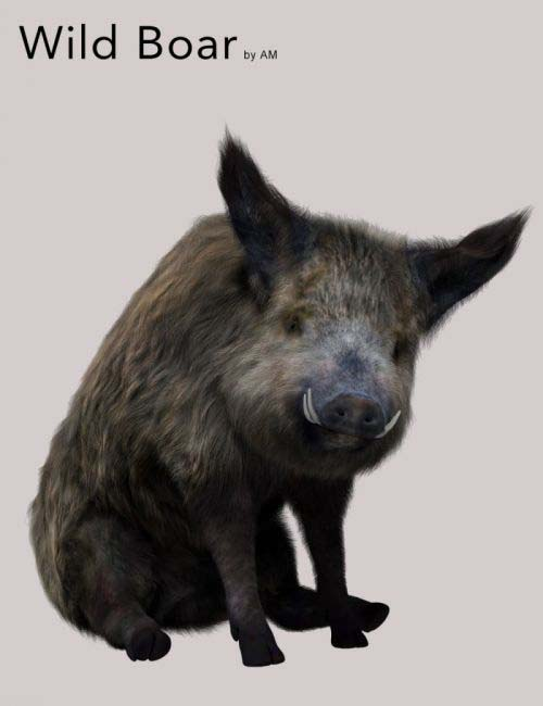 Wild Boar by AM